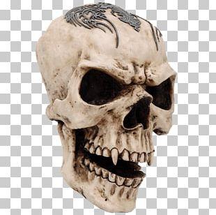 Human Skull Symbolism Human Skeleton Vampire PNG
