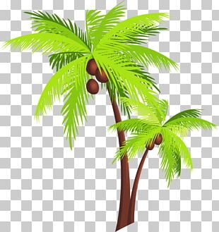 Coconut Tree Arecaceae PNG