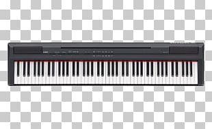 Yamaha P-115 Digital Piano Stage Piano Keyboard PNG