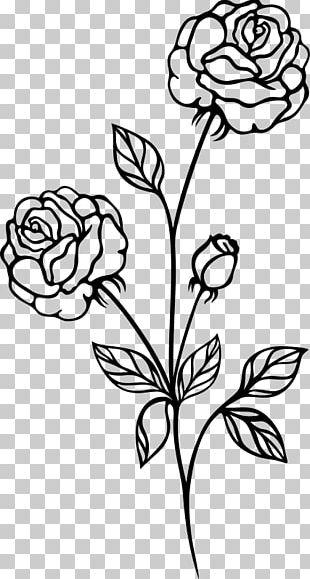 Rose Drawing Shrub PNG