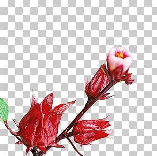 Roselle Flowers Roselle Flowers PNG