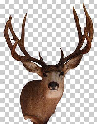 White-tailed Deer Elk Mule Deer Antler PNG
