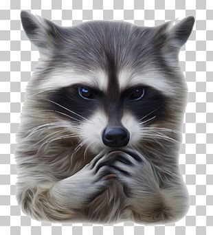 Raccoon Rat Euclidean Illustration PNG