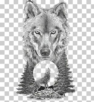 Gray Wolf Art In Motion Tattoo Studio Tattoo Artist Drawing PNG