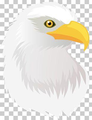 Bald Eagle Hawk PNG