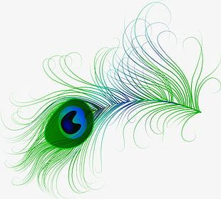 Hand-painted Peacock Feathers PNG