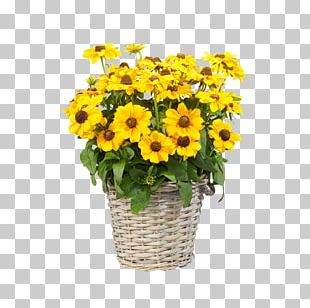 Common Sunflower Floral Design Transvaal Daisy Cut Flowers Chrysanthemum PNG