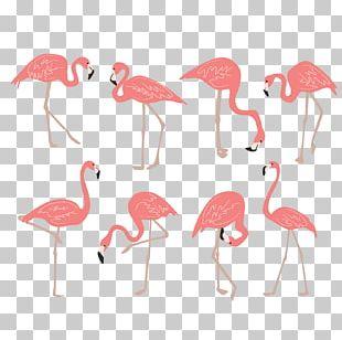 Flamingo Drawing PNG