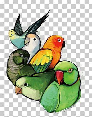 Budgerigar Lovebird Parrot PNG