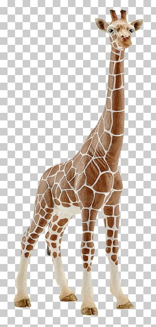 Giraffe Schleich Calf Amazon.com Toy PNG