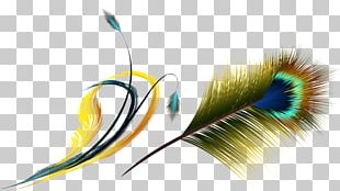 Flight Feather Asiatic Peafowl PNG