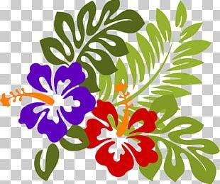 Rosemallows Hawaiian Hibiscus Flower PNG