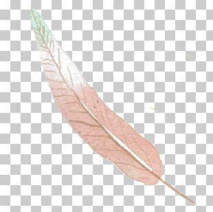 Feather Euclidean Color PNG