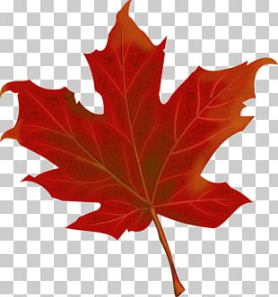 150th Anniversary Of Canada Maple Leaf PNG