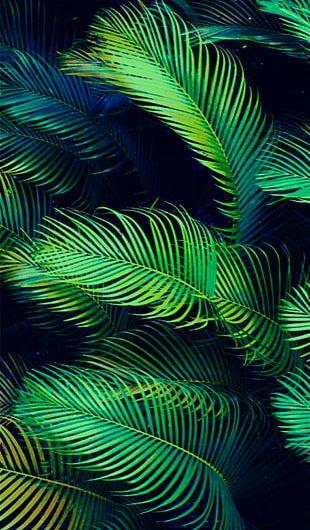 Arecaceae Leaf Palm Branch Tropics PNG