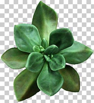 Succulent Plant Flower PNG
