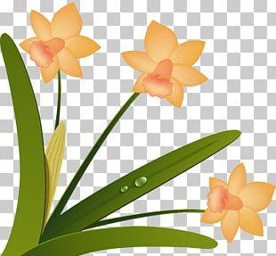 Cut Flowers Floristry Floral Design Moth Orchids PNG
