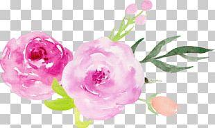 Wedding Invitation Centifolia Roses Garden Roses Pink Flower PNG