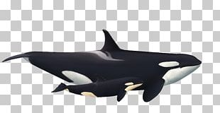 Captive Killer Whales Rough-toothed Dolphin White-beaked Dolphin PNG