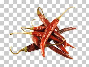 Mexican Cuisine Chile De árbol Poblano Guajillo Chili Pequin Pepper PNG