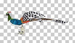 Galliformes Feather Beak Wildlife Animal PNG