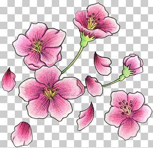 Cherry Blossom Tattoo Flash PNG