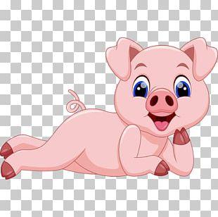 Domestic Pig Cartoon Illustration PNG