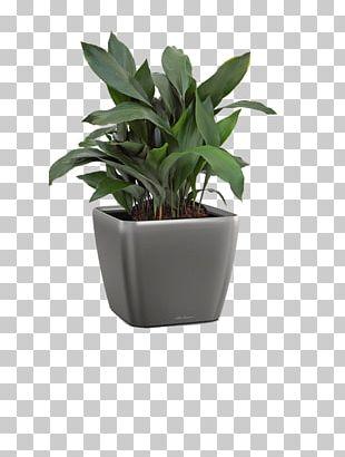 Flowerpot Leaf Houseplant Agave INAV DBX MSCI AC WORLD SF PNG