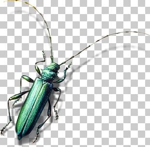 Insect Bird Longhorn Beetle Animal PNG