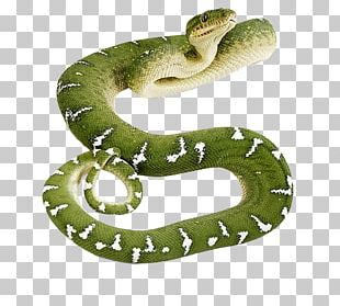 Snake PNG