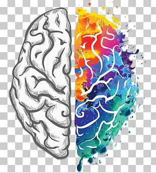 Human Brain Creativity Your Creative Brain Lateralization Of Brain Function PNG