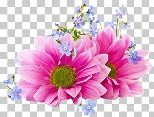 Portable Network Graphics Flower Desktop Chrysanthemum PNG