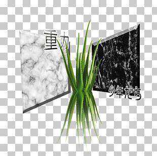 Art Canvas Marble Printmaking Allium Fistulosum PNG