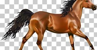 Arabian Horse Pony Andalusian Horse American Paint Horse PNG