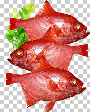 Northern Red Snapper Fish Products Pagrus Major PNG