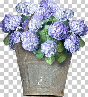 Hydrangea Floral Design Cut Flowers PNG