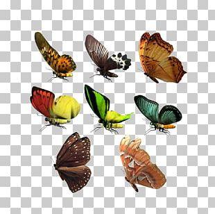 CorelDRAW Adobe Illustrator Icon PNG