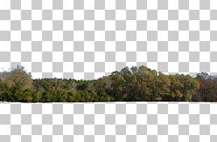 Tree Line Forest Desktop PNG