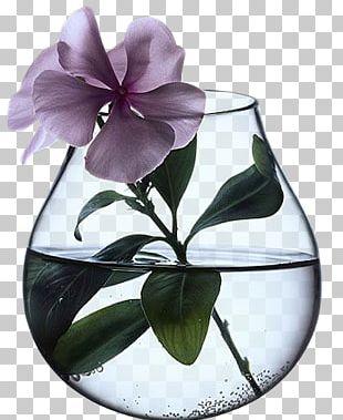 Vase Les Vertus Des Plantes Flower Ceramic Floral Design PNG