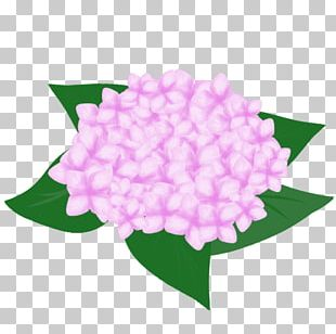 French Hydrangea Flower Pink Petal PNG