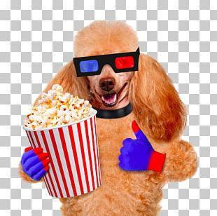 Dog Popcorn Cinema Film Stock Photography PNG
