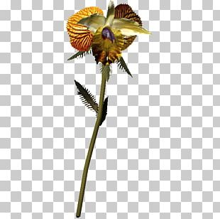 Insect Cut Flowers Flowering Plant Plant Stem Petal PNG