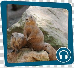 Prairie Dog Marmot Day Groundhog Day Animal PNG