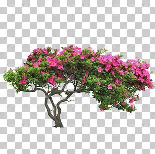 Shrub Garden Euclidean PNG