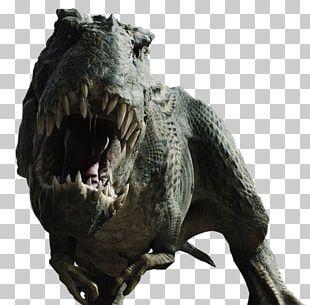 Dracorex Triceratops Tyrannosaurus Dinosaur Play Desktop PNG