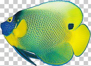 Coloring Fish Sad Fish Ornamental Fish PNG