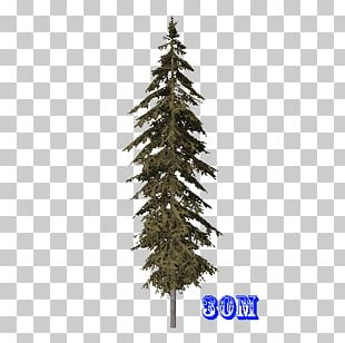 Spruce Christmas Ornament Fir Christmas Tree Pine PNG