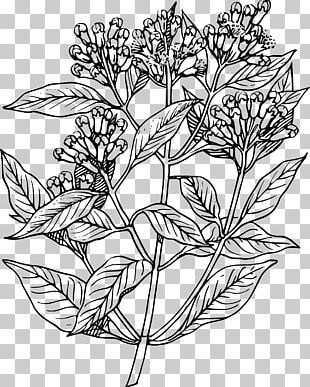 Drawing Apple Mint Herb PNG