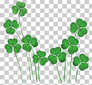 Ireland Saint Patrick's Day Public Holiday Shamrock PNG