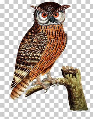 Great Horned Owl Bird Of Prey Eurasian Eagle-owl PNG